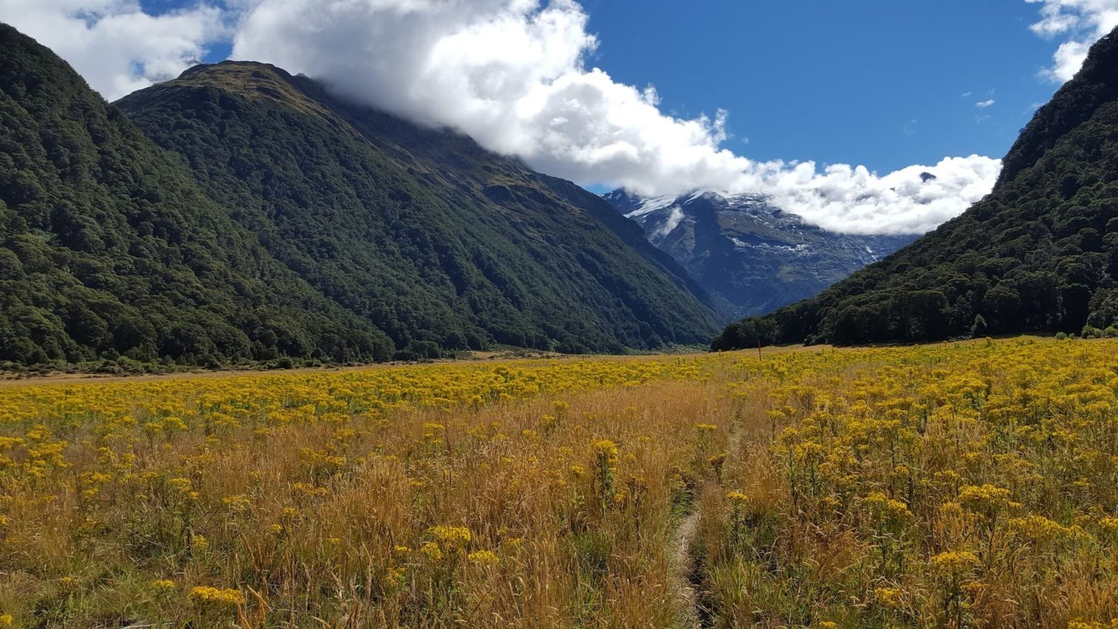 Siberia Valley, Mt Aspiring National Park, NZ