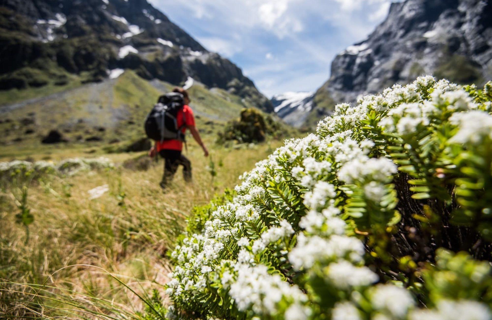 Exploring Alpine Valleys